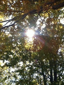 Sun through the trees on a crisp fall day